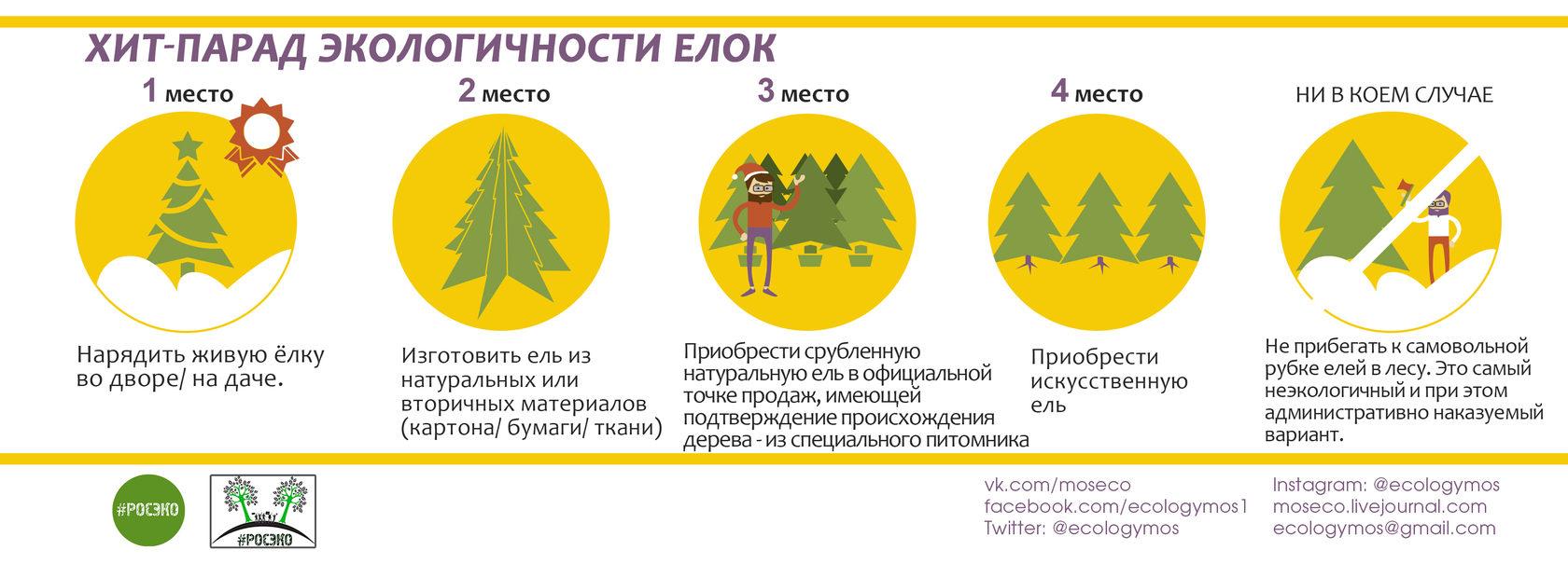 Обсуждаем вопрос экологичного выбора новогодней ёлки на Радио «Соль»